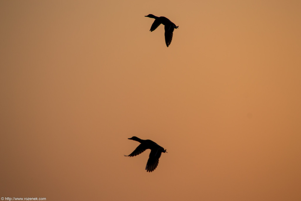 2012.05.22 - Sunset and Birds - 07