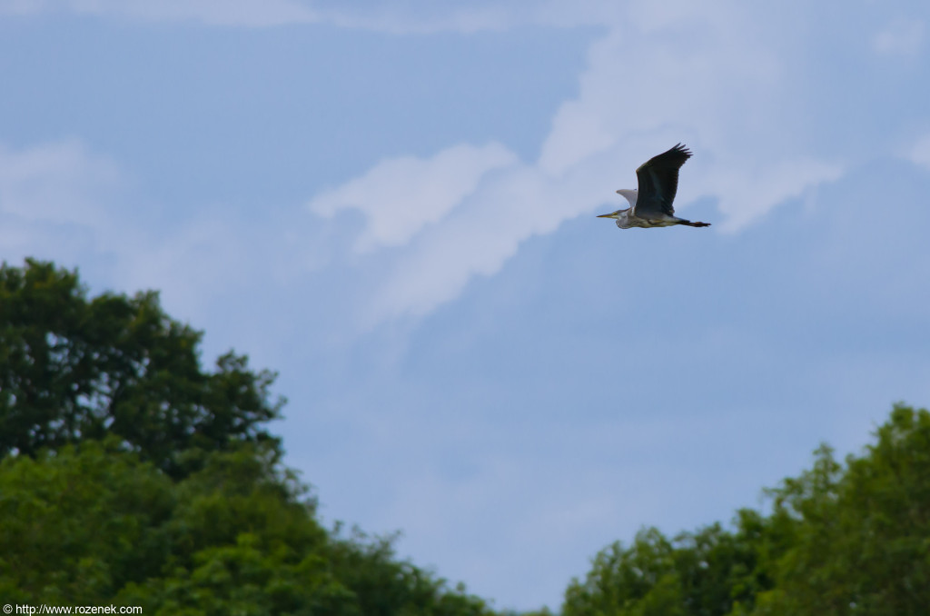 2012.08.05 - Costessey - Bird Photos - 03