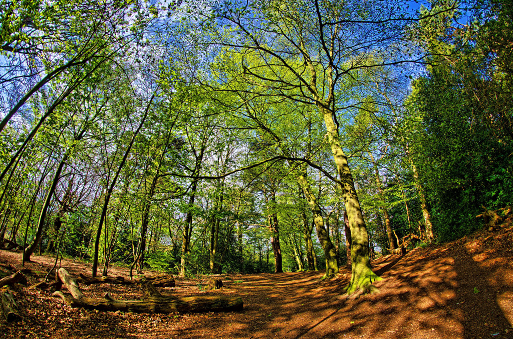 2013.05.04 - Lion Wood Norwich - HDR-02
