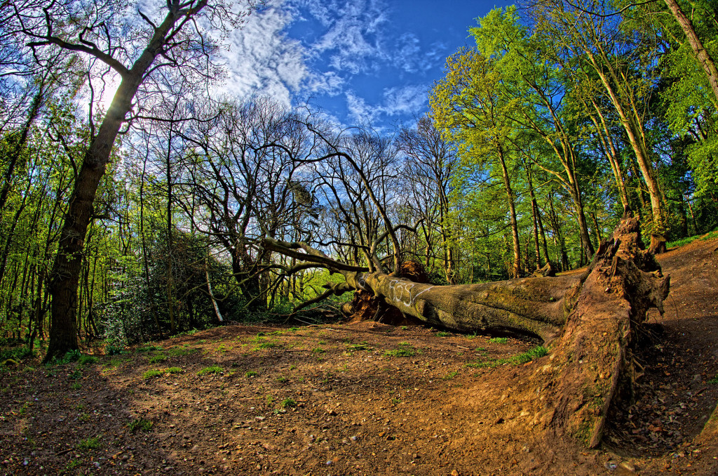 2013.05.04 - Lion Wood Norwich - HDR-09