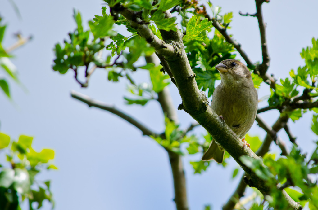 2012.06.04 - Marriotts Way Birds - 03