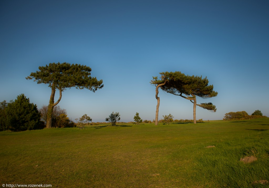 2014.03.09 - Landscape with Pines - HDR-02