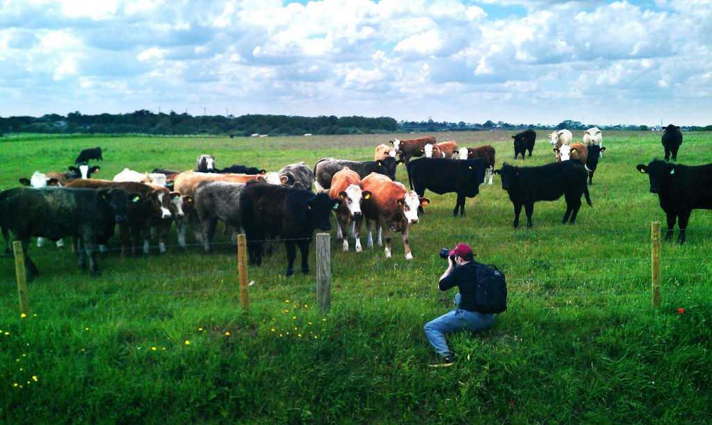 cows-and-me