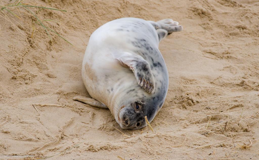 2013.12.26 - Seals - 05