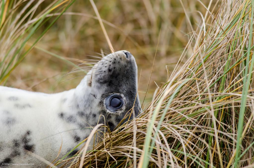 2013.12.26 - Seals - 07