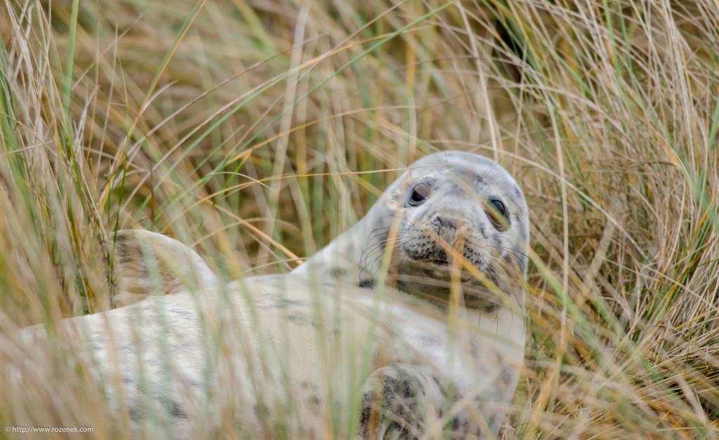 2013.12.26 - Seals - 08