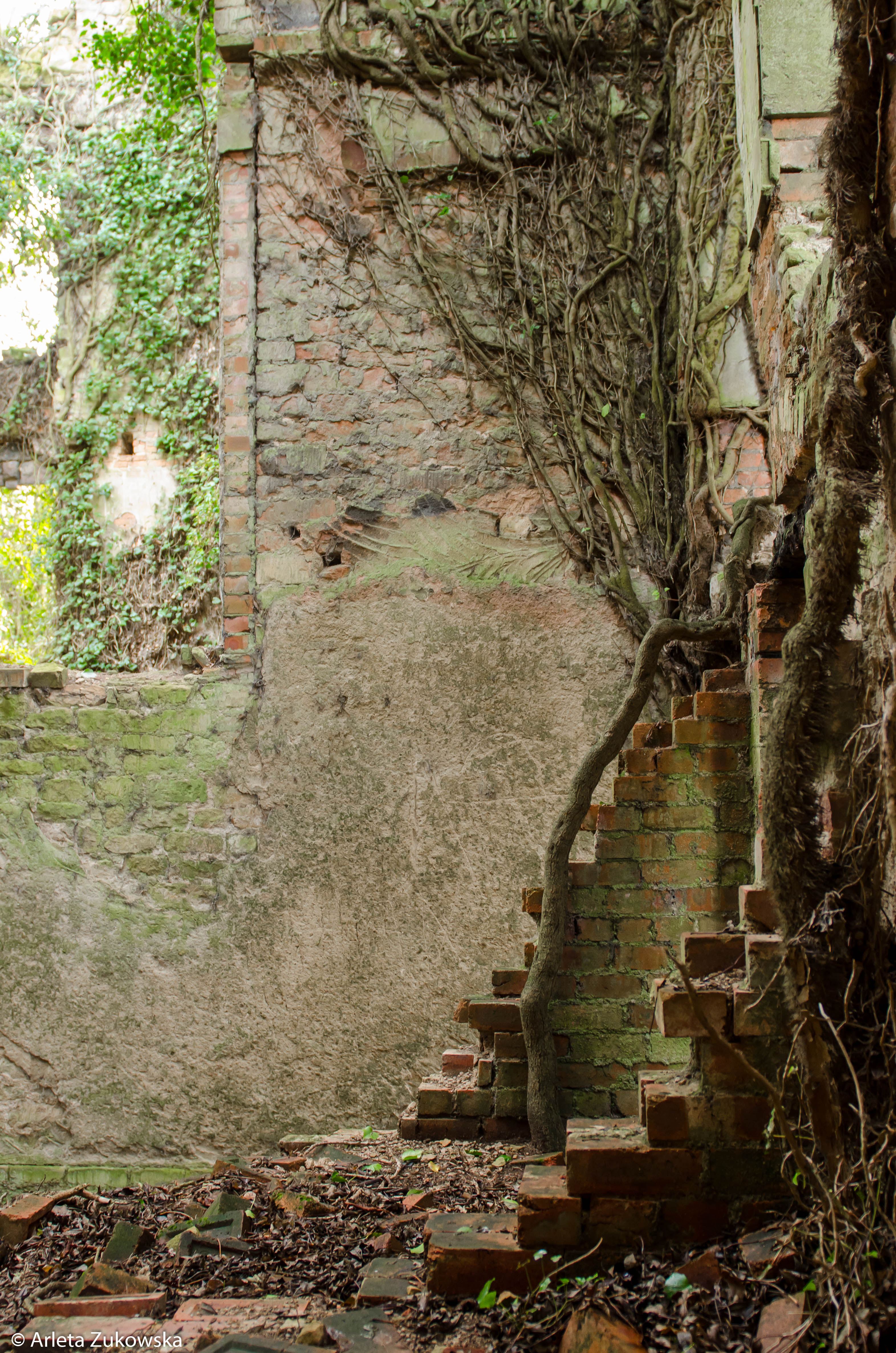 2014.01.18 - Riseholme Abandoned House II - 04