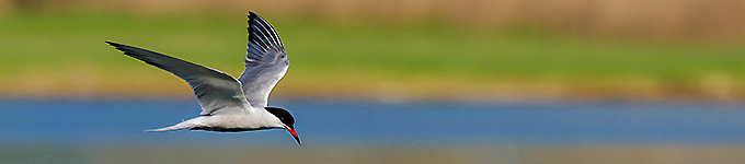 birds-banner