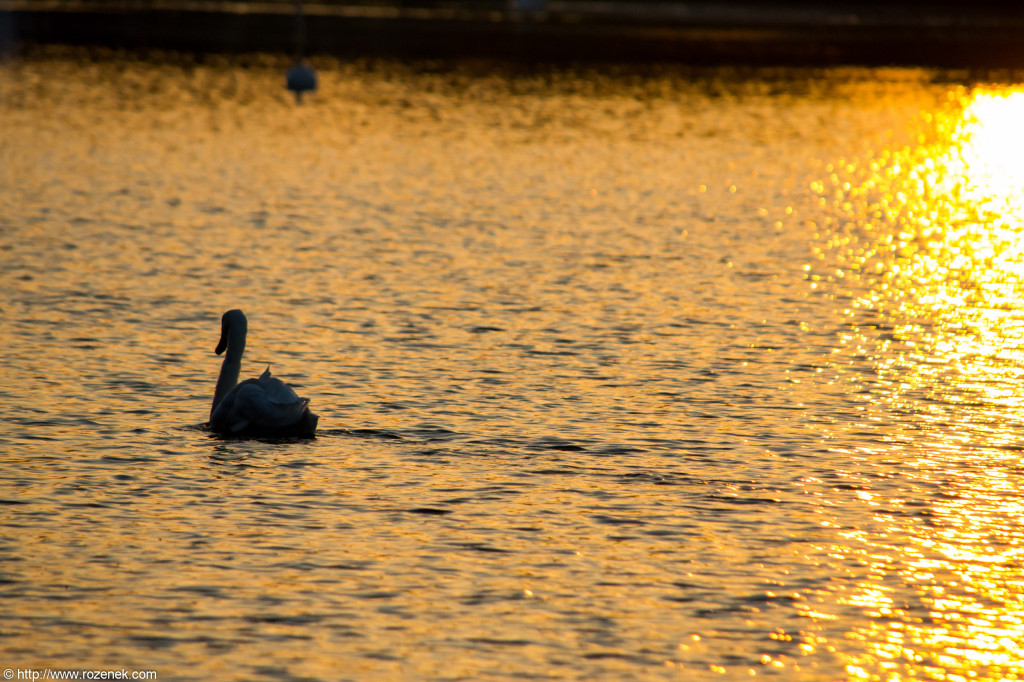 2012.05.22 - Sunset and Birds - 03