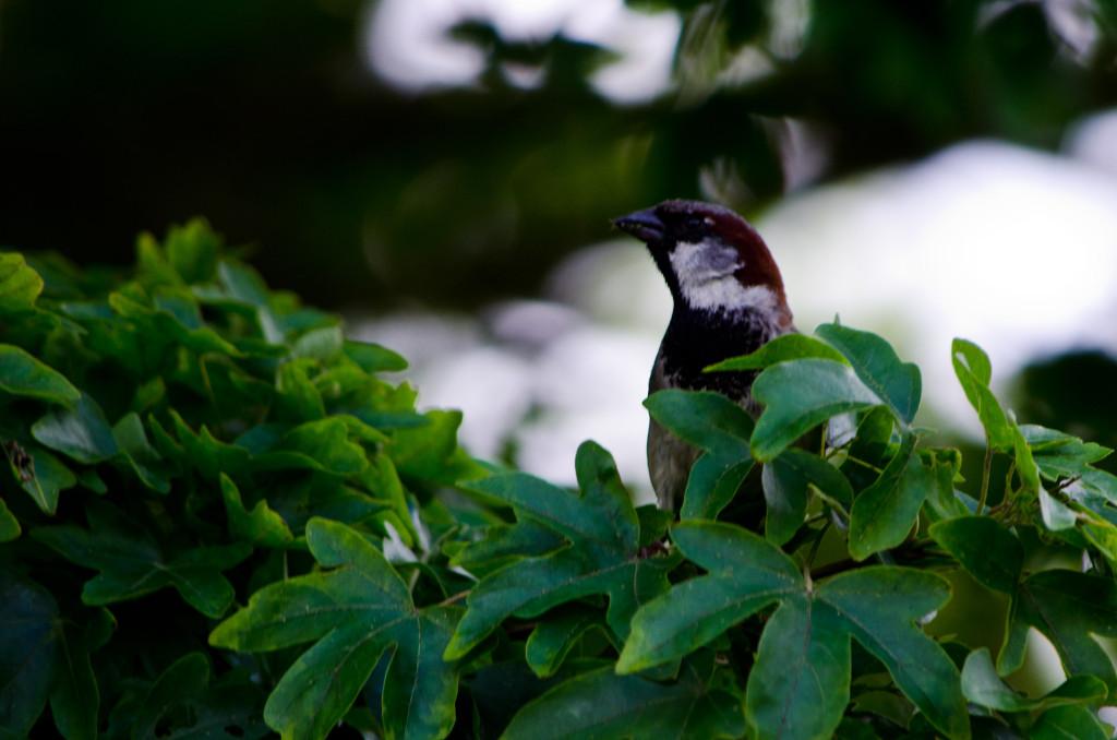 2012.06.04 - Marriotts Way Birds - 02