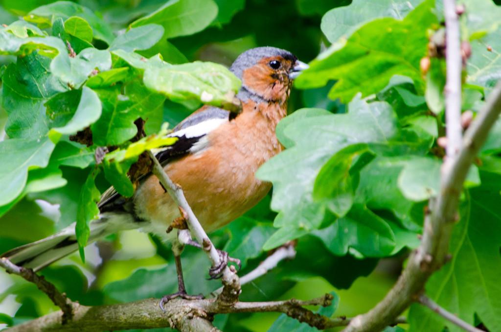2012.06.04 - Marriotts Way Birds - 09