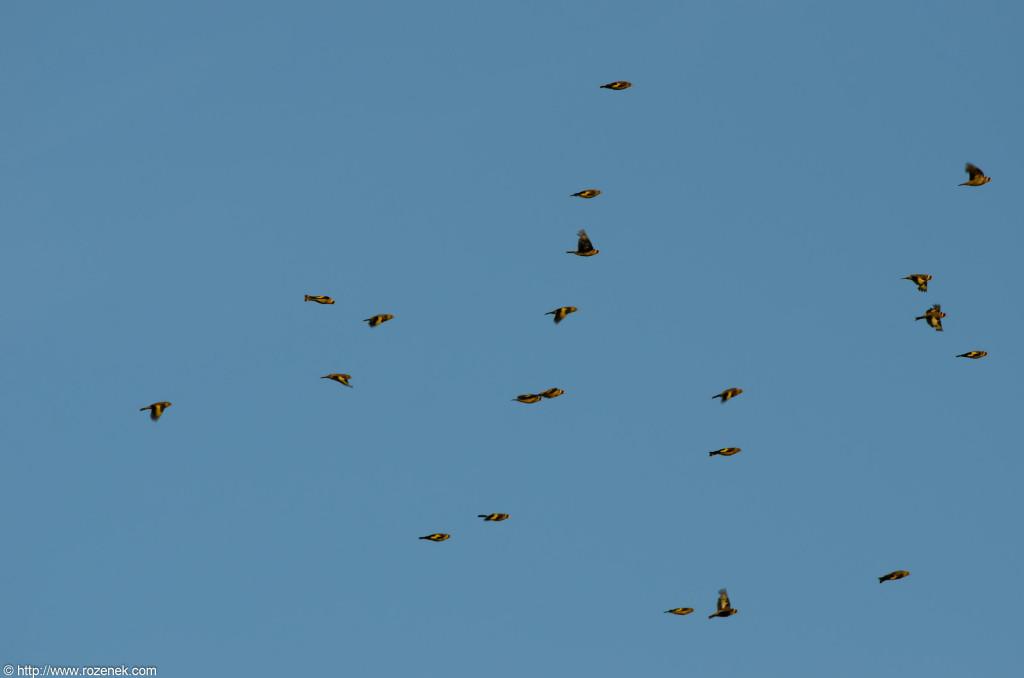 2012.08.08 - Whitlingham - 04