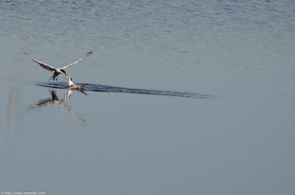2012.08.18 - Strumpshaw Fen - 08