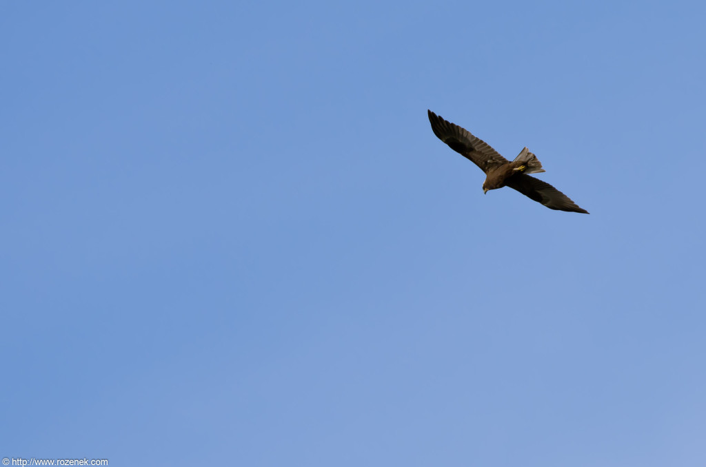 2012.08.27 - Strumpshaw Fen - 01