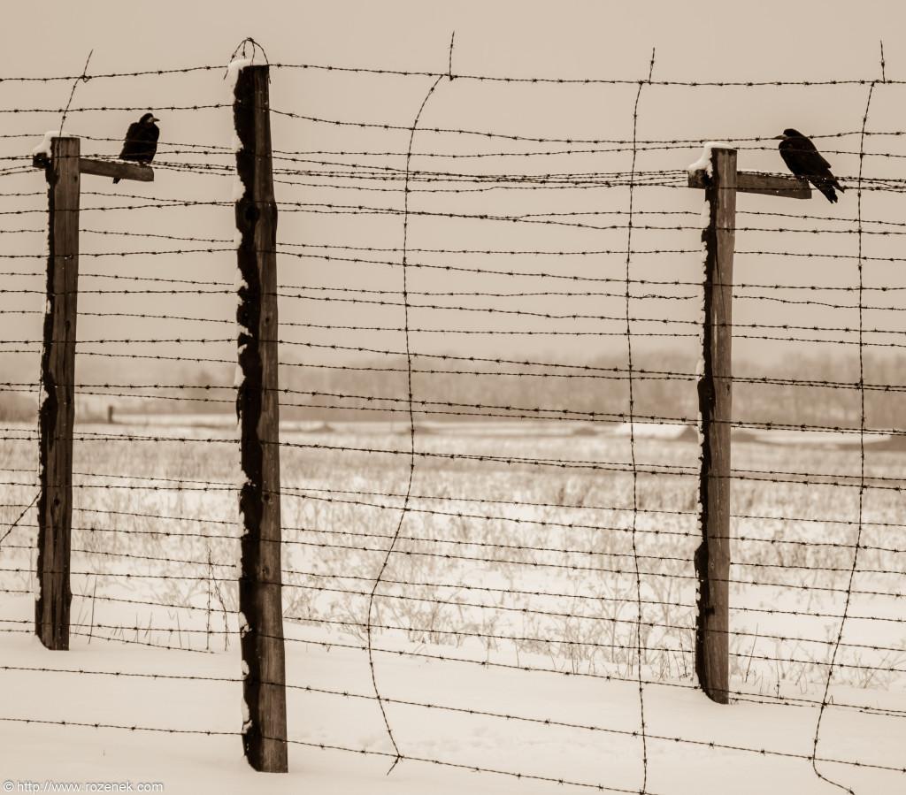 2012.12.16 - Majdanek - 06