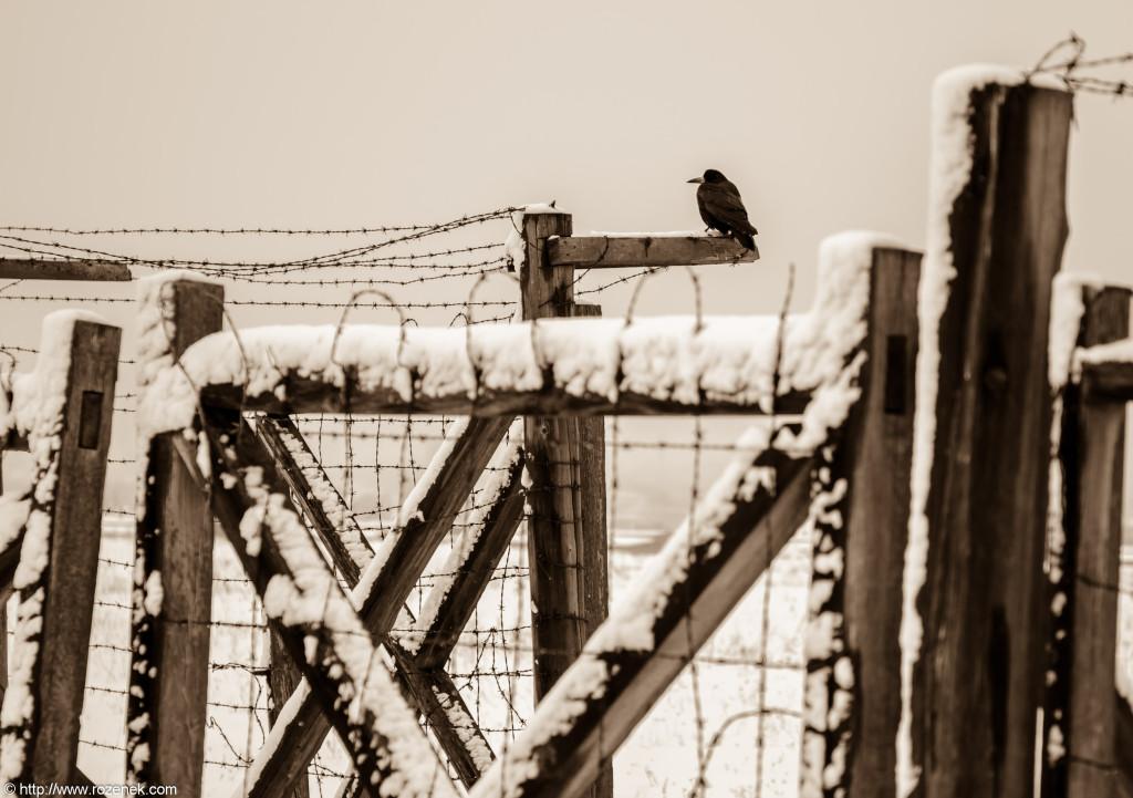2012.12.16 - Majdanek - 08