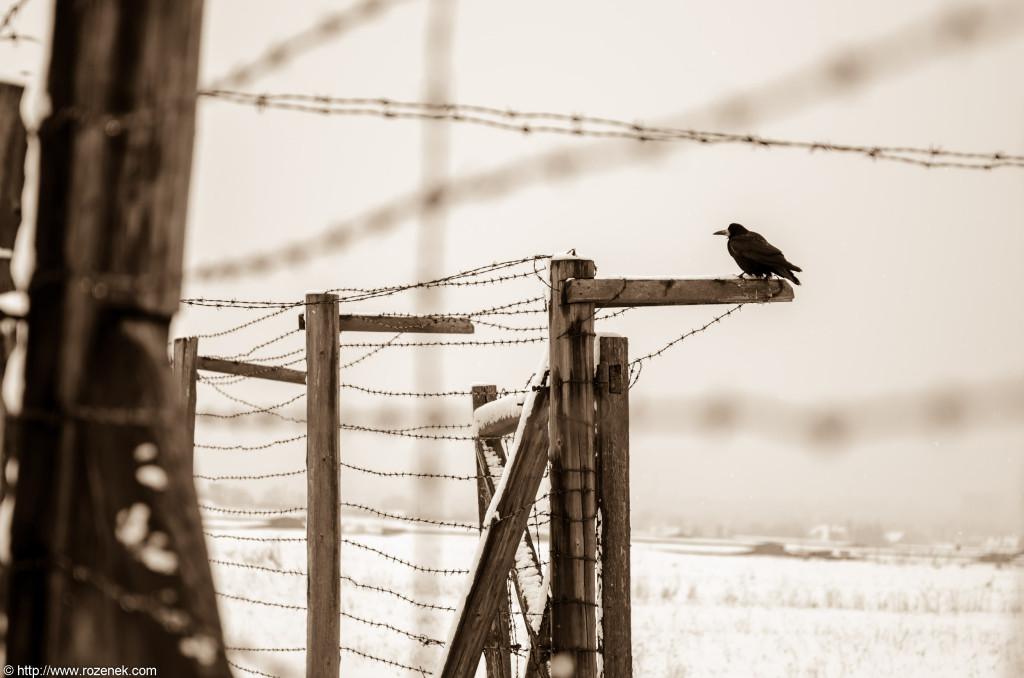 2012.12.16 - Majdanek - 11