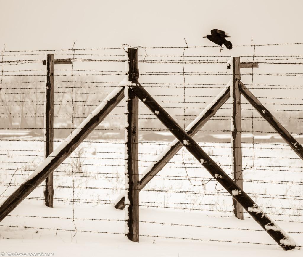 2012.12.16 - Majdanek - 13