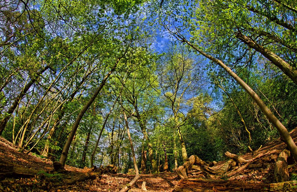 2013.05.04 - Lion Wood Norwich - HDR-05