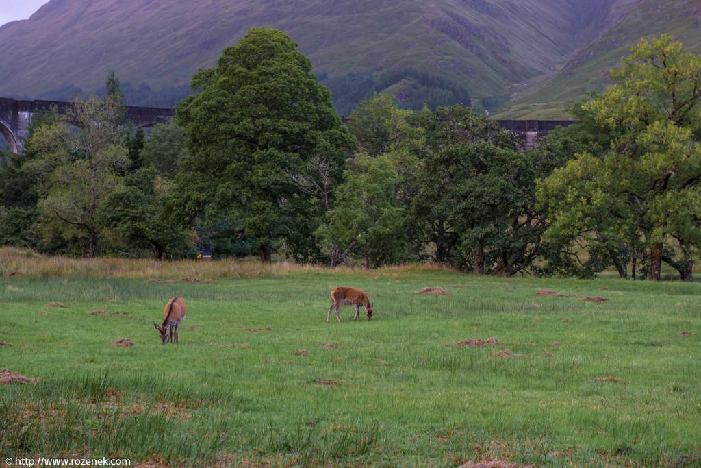 2013.08.30 - Glenfinnan Deers - 44