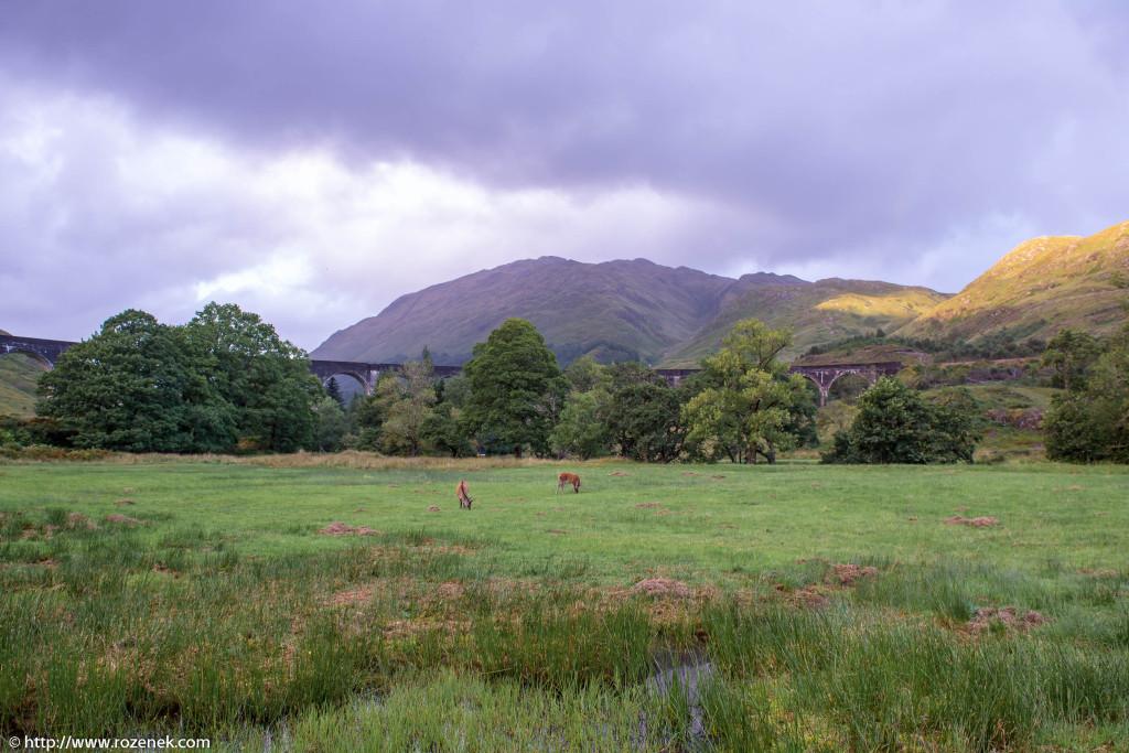2013.08.30 - Glenfinnan Deers - 45