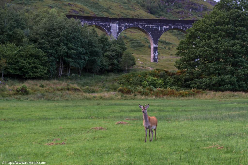 2013.08.30 - Glenfinnan Deers - 46