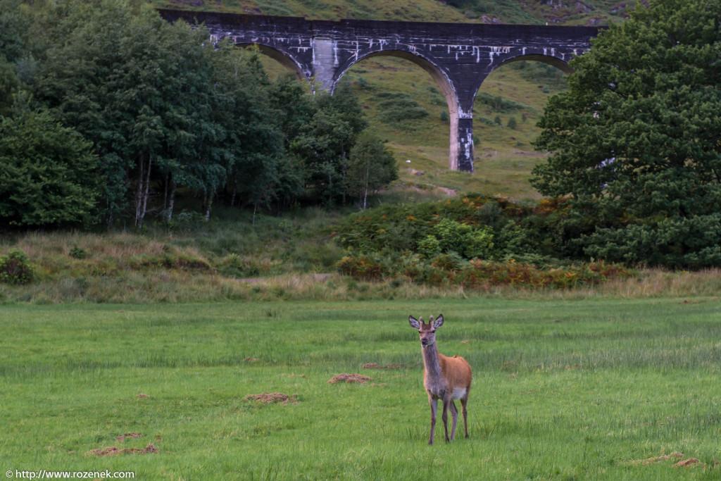 2013.08.30 - Glenfinnan Deers - 47