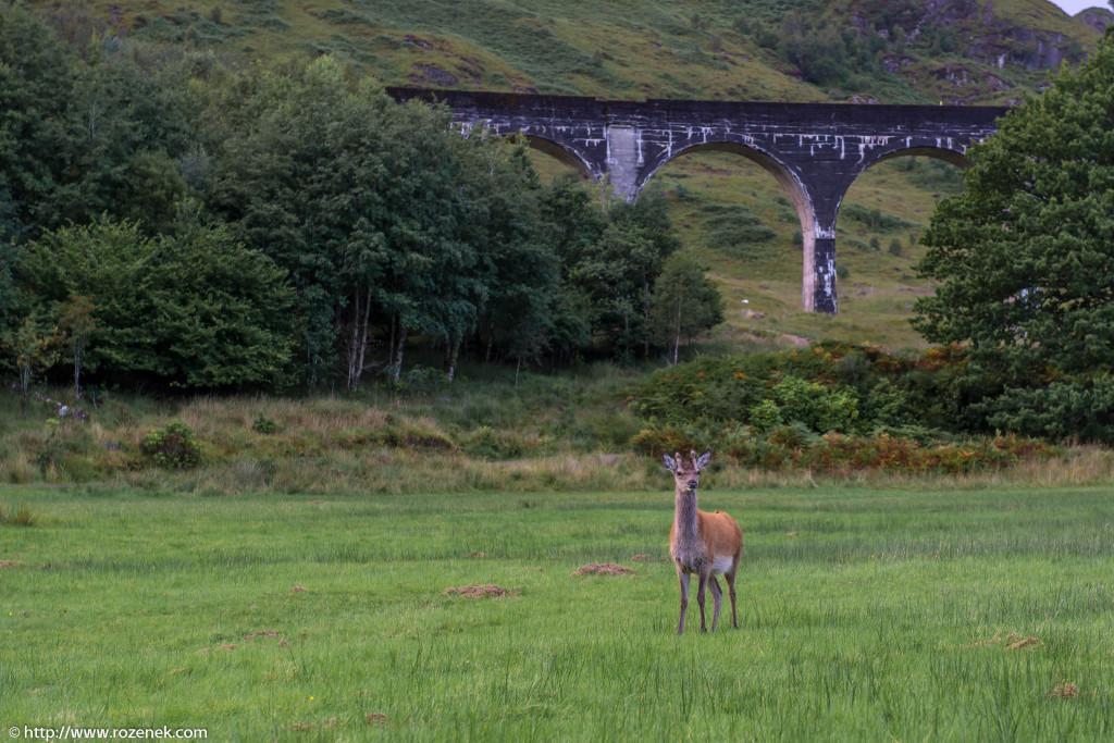 2013.08.30 - Glenfinnan Deers - 48