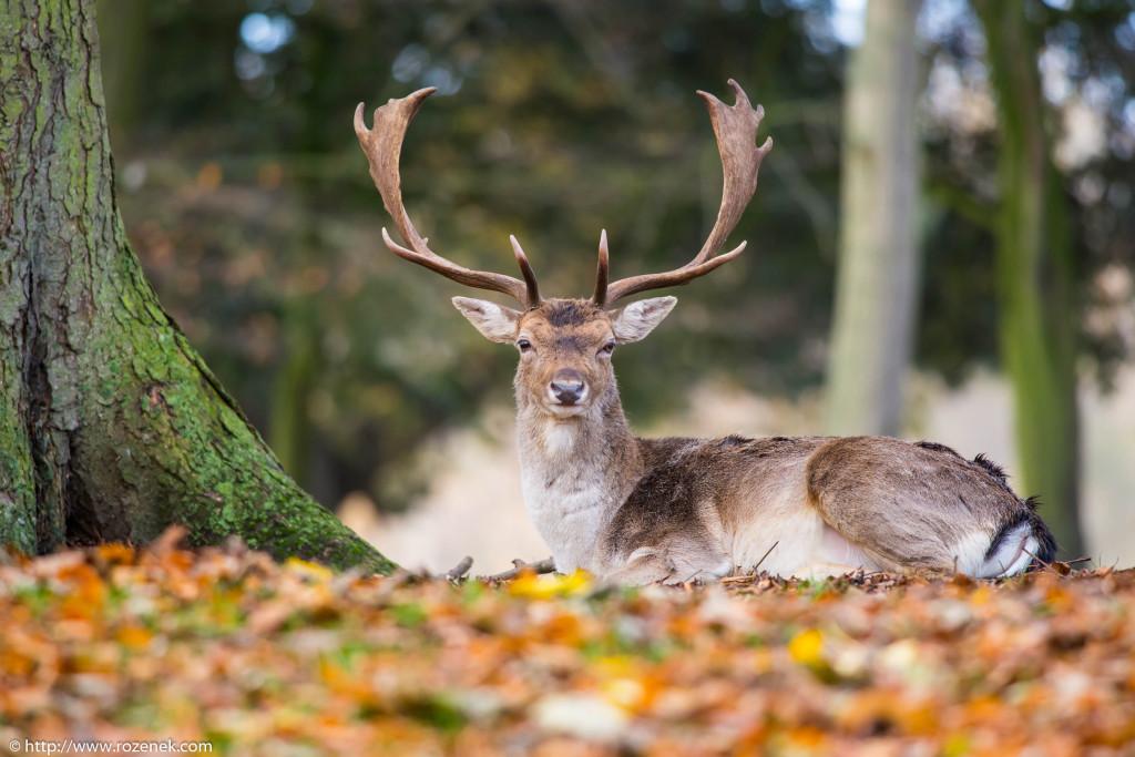 2013.11.30 - Holkham Deers - 13