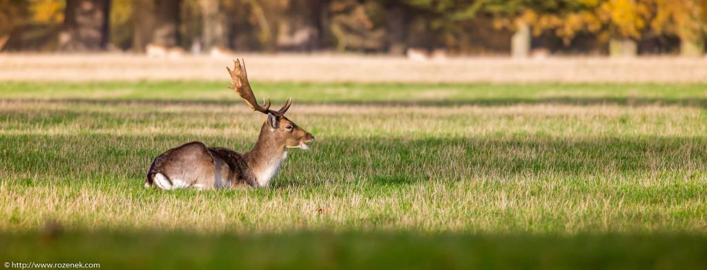 2013.11.30 - Holkham Deers - 14