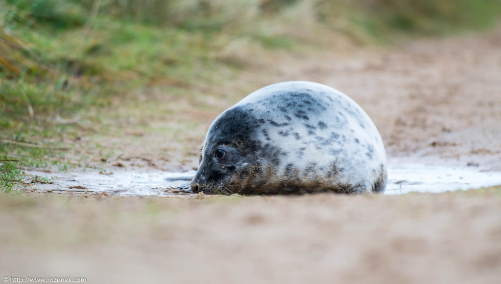2013.12.24 - Seals - 23