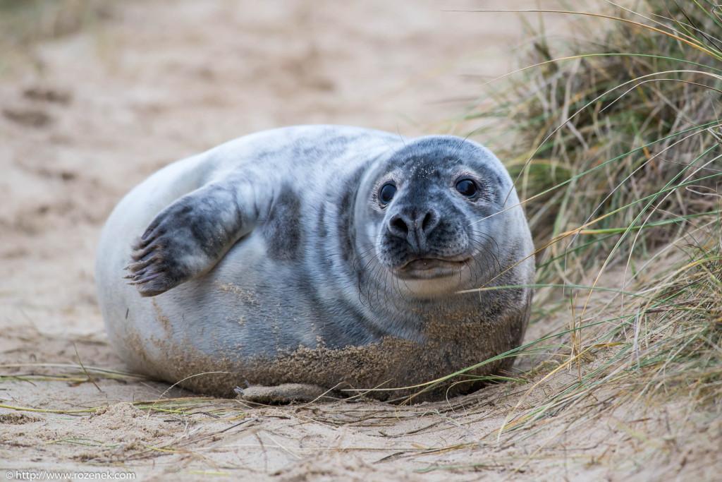 2013.12.24 - Seals - 27