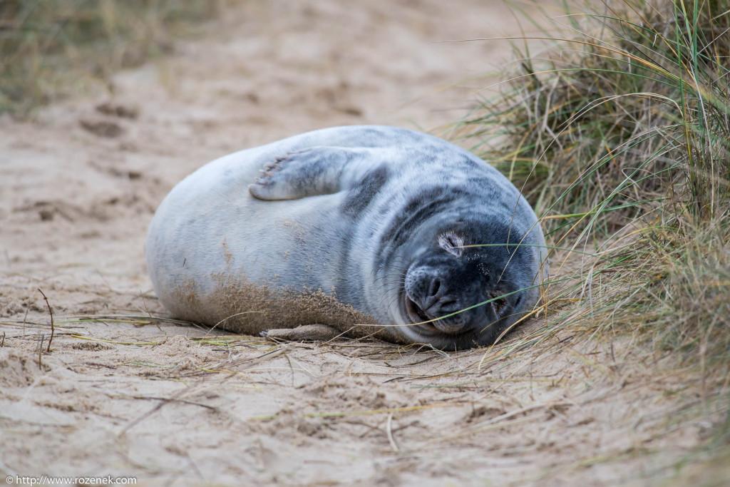 2013.12.24 - Seals - 28
