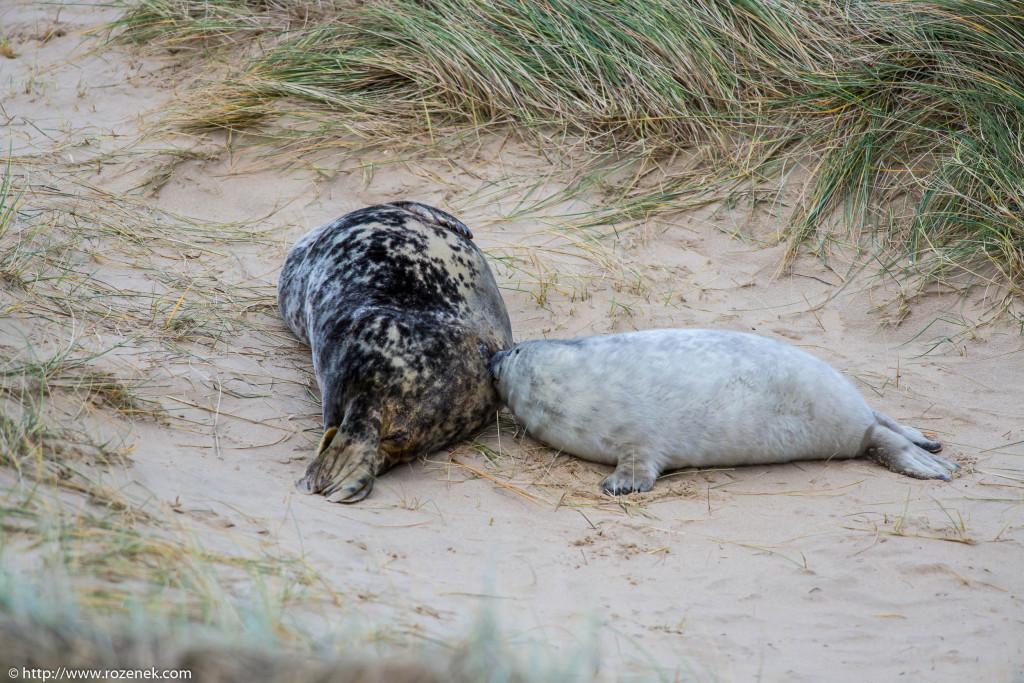 2013.12.24 - Seals - 30