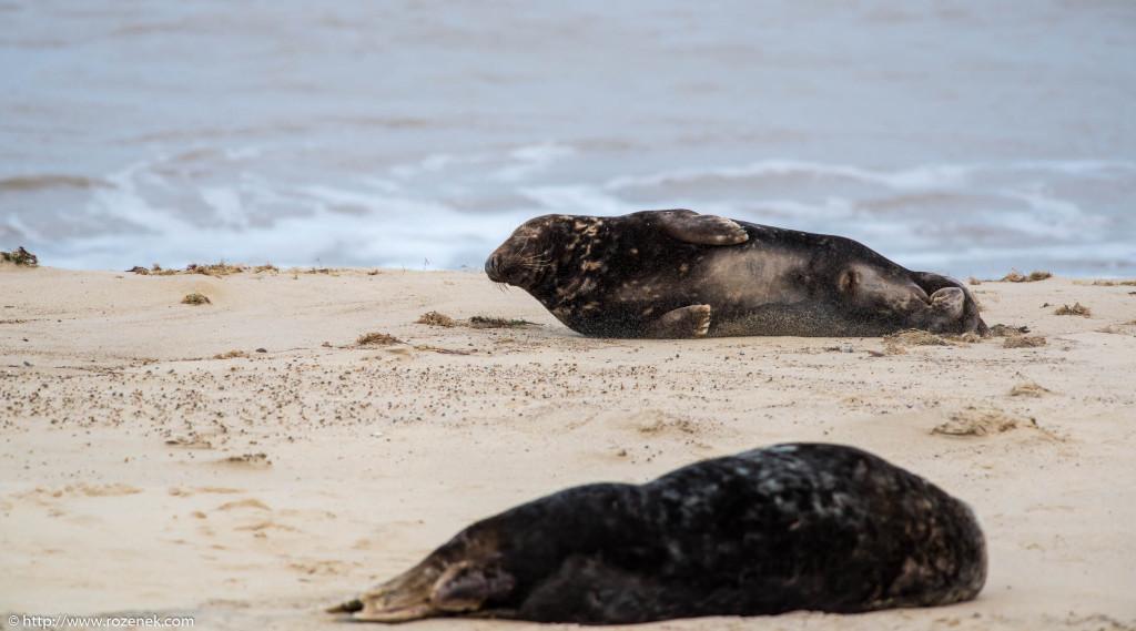 2013.12.24 - Seals - 31