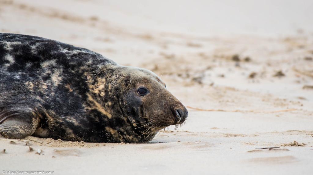 2013.12.24 - Seals - 33