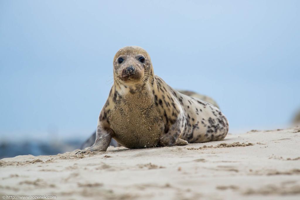 2013.12.24 - Seals - 34