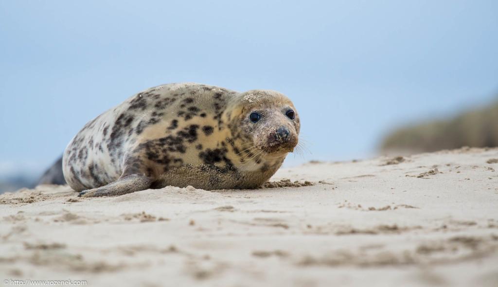 2013.12.24 - Seals - 36