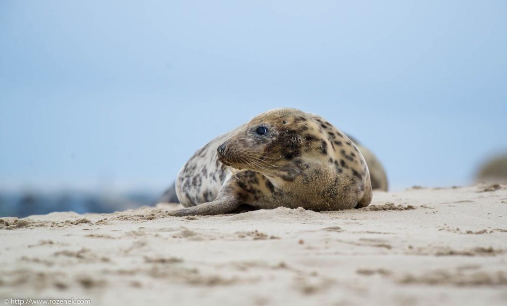 2013.12.24 - Seals - 37