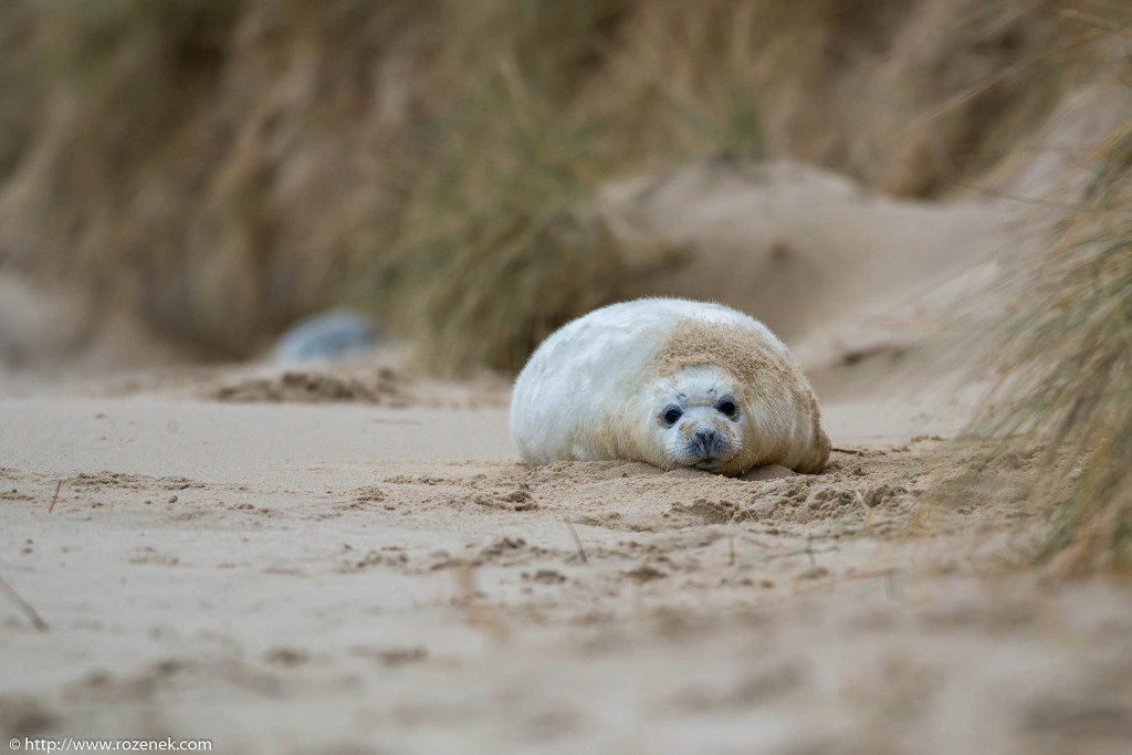 2013.12.24 - Seals - 38