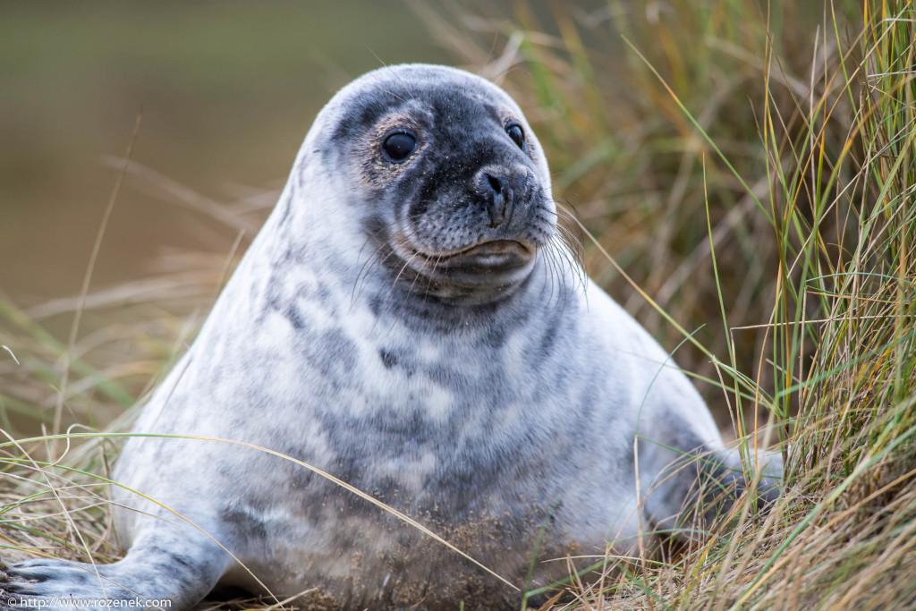 2013.12.24 - Seals - 39
