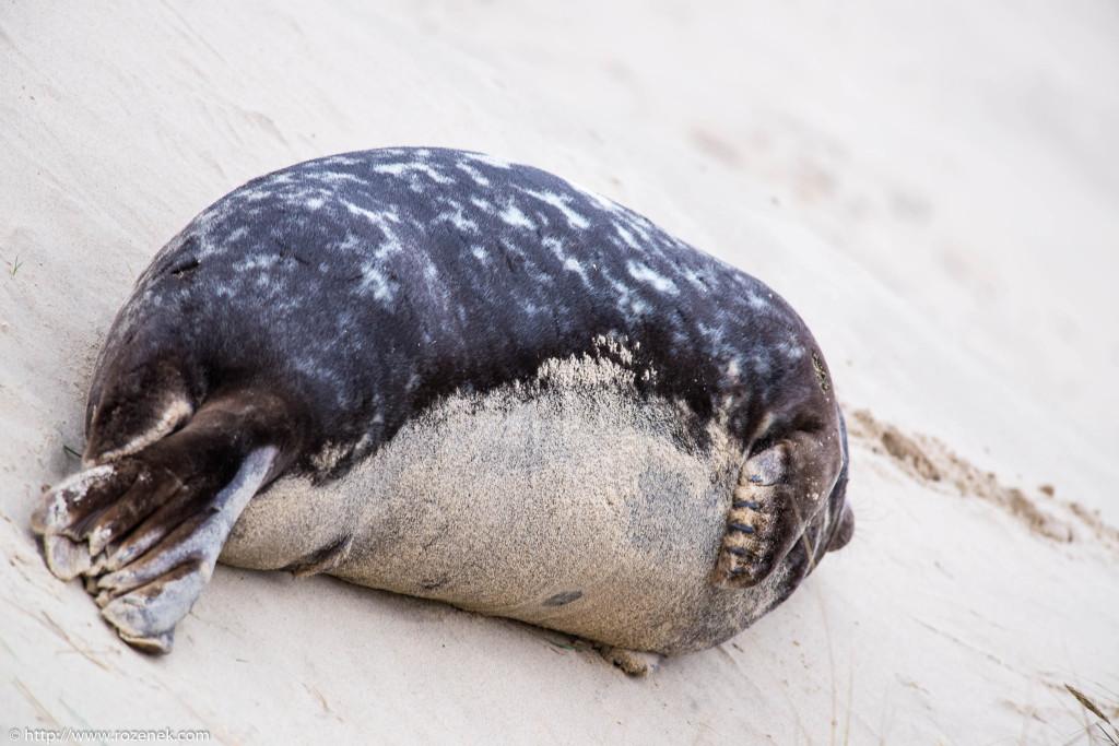2013.12.24 - Seals - 41
