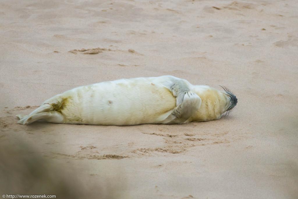 2013.12.24 - Seals - 49