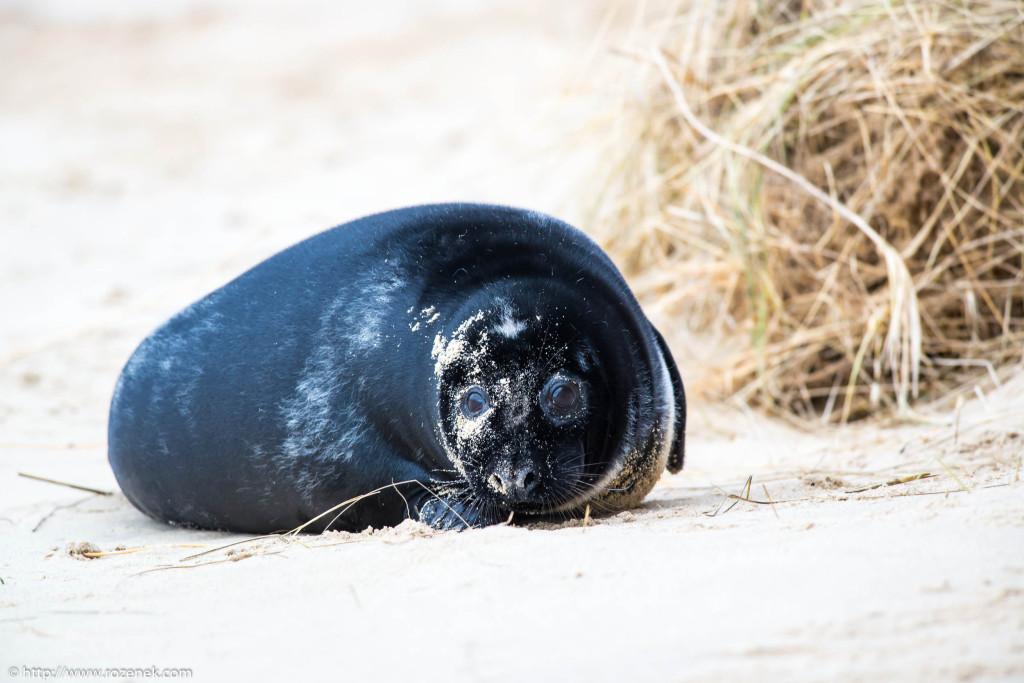 2013.12.24 - Seals - 53