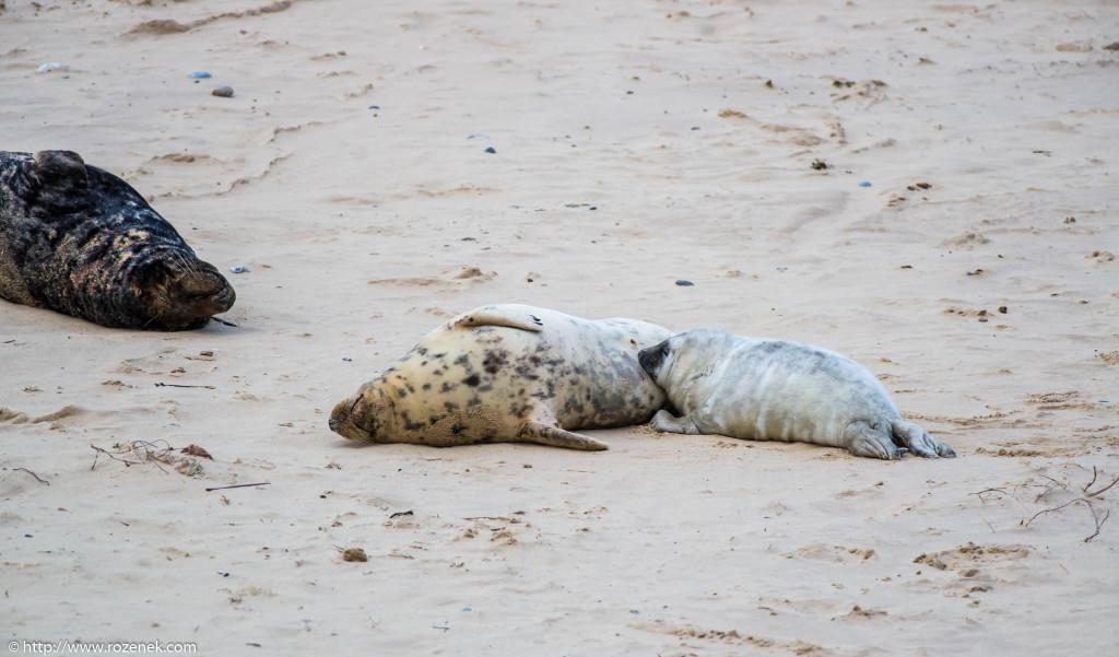 2013.12.24 - Seals - 55