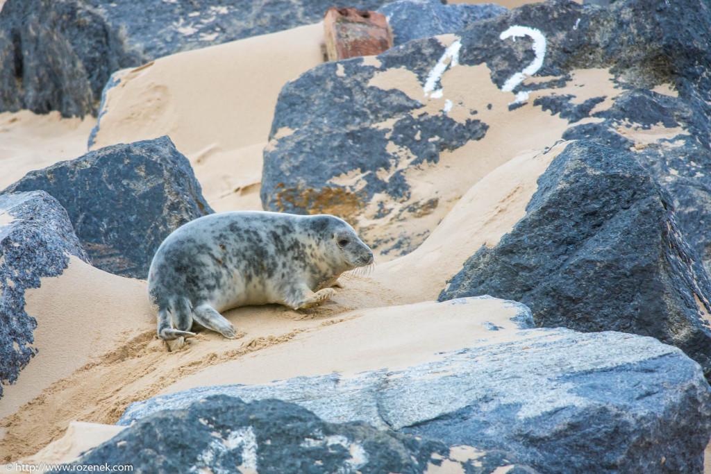 2013.12.24 - Seals - 56