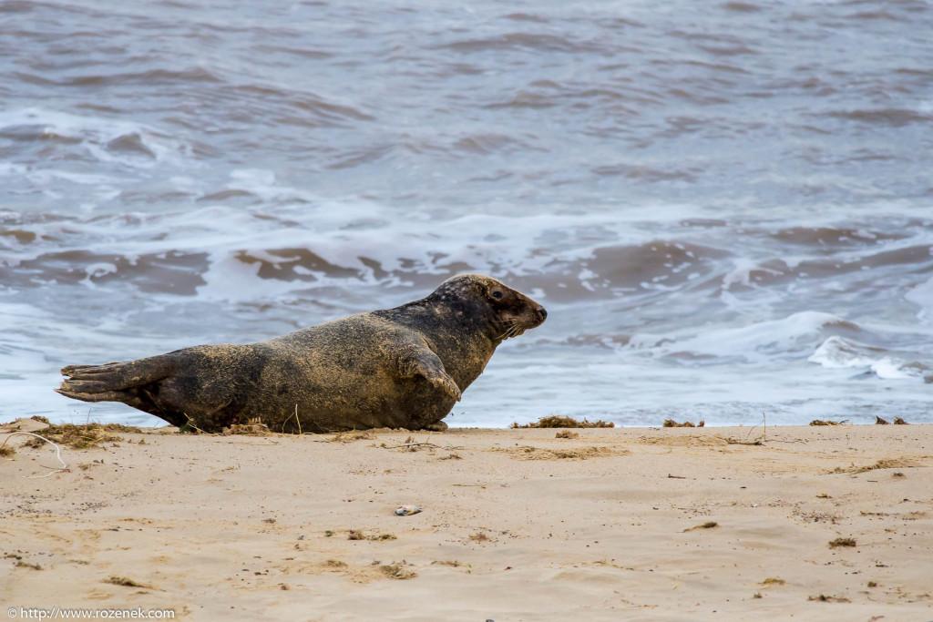 2013.12.24 - Seals - 60