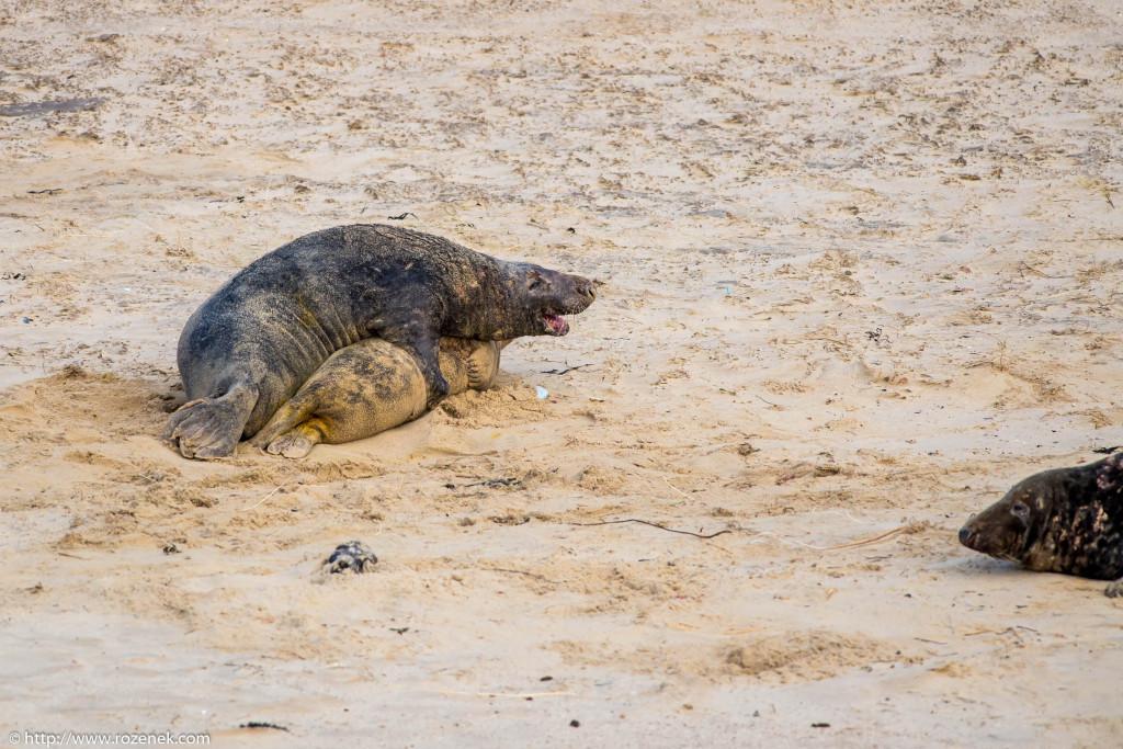 2013.12.24 - Seals - 63