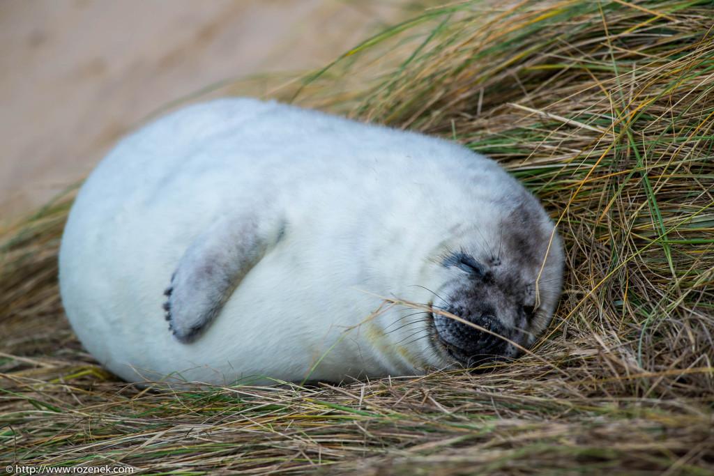 2013.12.24 - Seals - 65