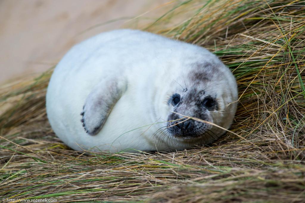 2013.12.24 - Seals - 66
